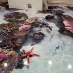 наливной пол с морской звездой